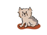 Illustration of my dog