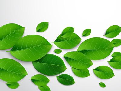 Vector Green Leaves vector illustrator tutorials green leaves