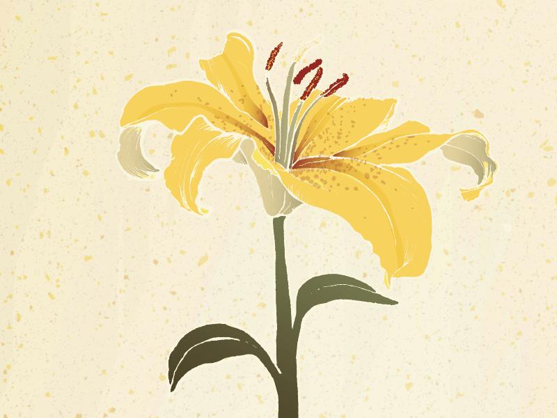 Second Words   Lily design illustration