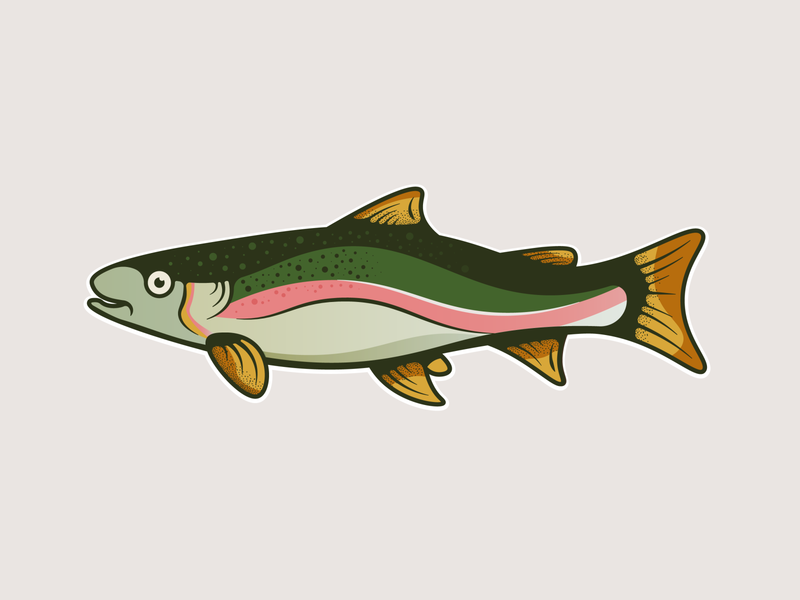 Rainbow Trout ui branding design minimal nature texture vector illustration illustrator rainbow trout fish trout fish logo