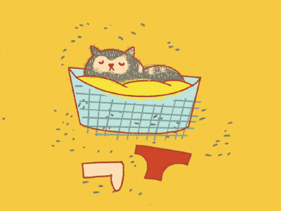 Cat in a laundry basket