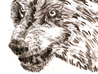 Wolf  sketch art last works