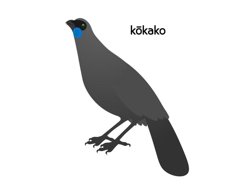 Kōkako endangered endangered species vector illustration design bird illustration wildlife study wildlife north island kokako north island kiwi new zealand native bird bird kokako