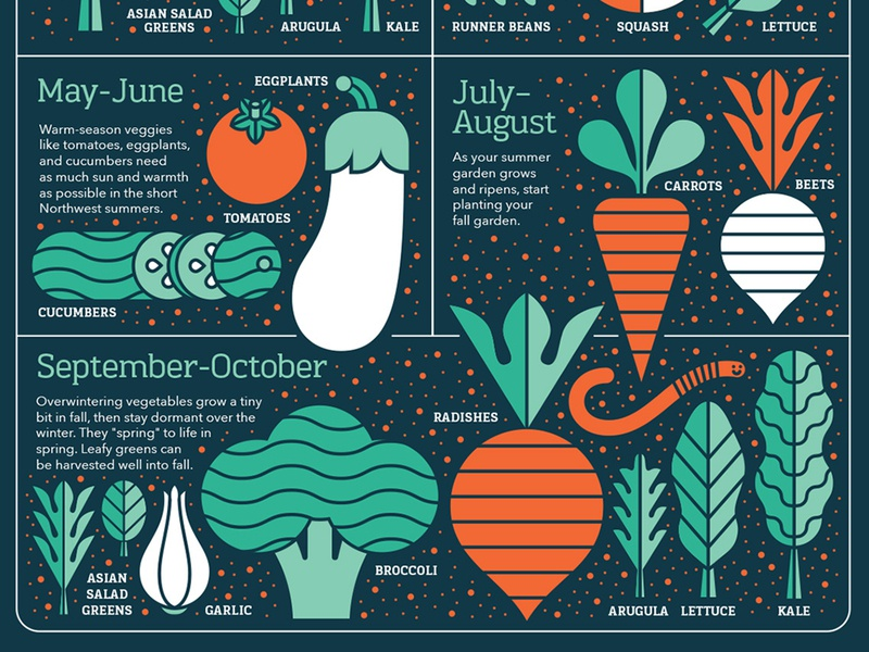 Growing Guide crop infographic carrots food garlic cucumber radish broccoli beet tomato vegetables