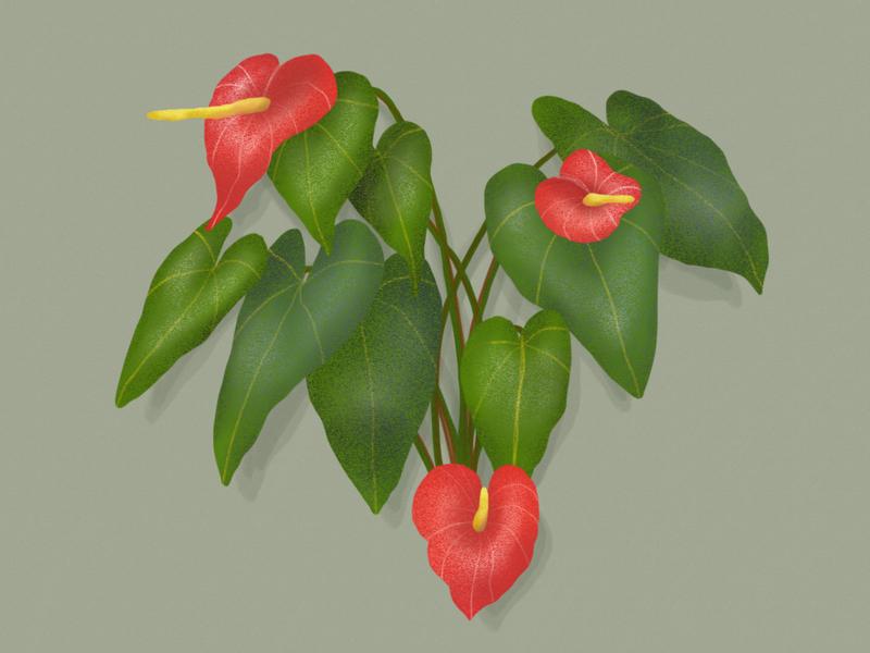 Anthurium jungle garden forest vegetal illustration dessin botanical botanic anthurium
