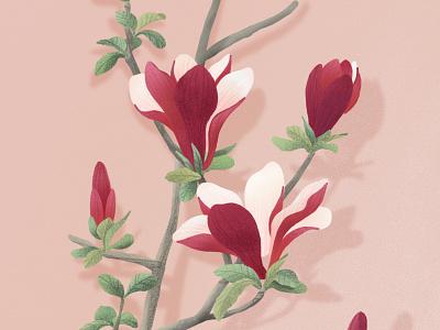 Magnolia tree magnolia vegetal jungle garden forest botanical botanic dessin illustration