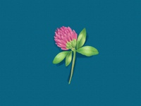 Fleur De Trefle