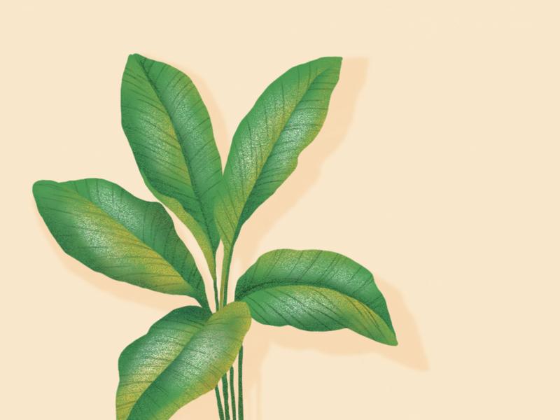elephant ear plant tropical leaves leaf plant drawing vegetal jungle garden forest botanical botanic illustration dessin