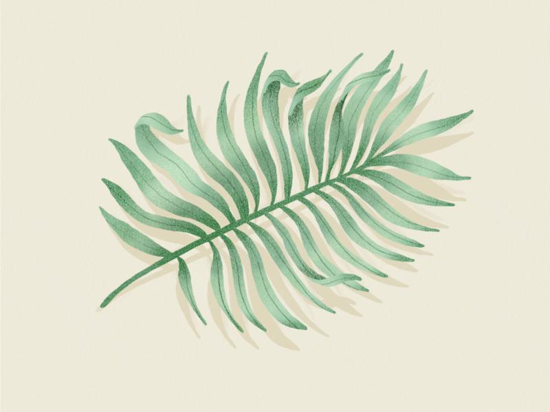 Palmier beach palm tree leaves leaf plant drawing vegetal jungle garden forest botanical botanic illustration dessin