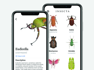 I N S E C T A education app zoo animal insect ladybird ladybug bug insects