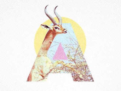 A - Antilope typography antilope a letter
