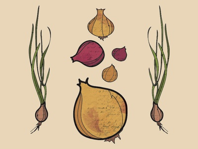 Provisions Onion Preview organic illustration garden plant seed provisions onion vegetable