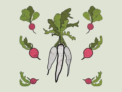 Provisions Radish Preview organic illustration garden plant seed provisions radish vegetable