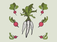Provisions Radish Preview