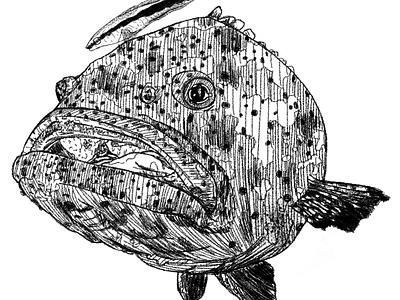 Epinephelus malabaricus biology science grouper ocean fish sea wildlife art wildlife art animals flat sketch illustration drawing digital art design