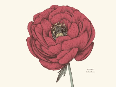 Peony - © by the ink - Cécile Ollichon