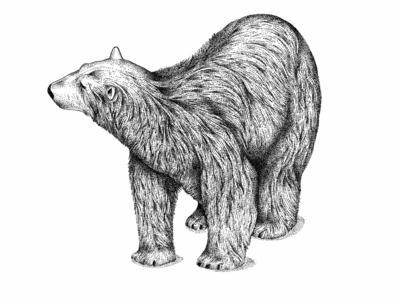Polar bear © by the ink - Cécile Ollichon