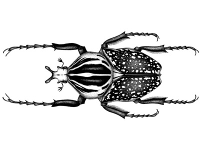 Goliath beetle © BY THE INK