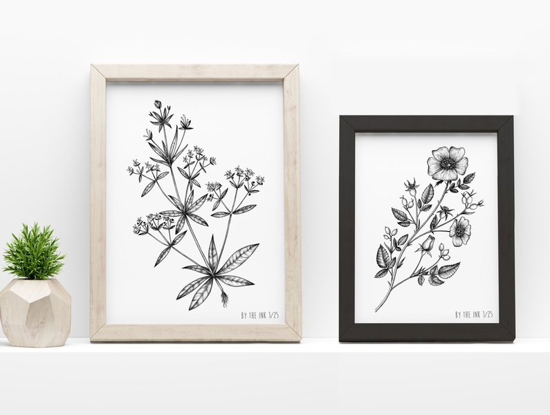 Botanical illustrations © by the ink - Cécile Ollichon