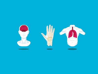 anatomy icons brain bones hand lungs icons anatomy illustrator vector