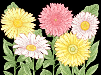 Graphic Daisies flower illustration daisies graphic art illustration