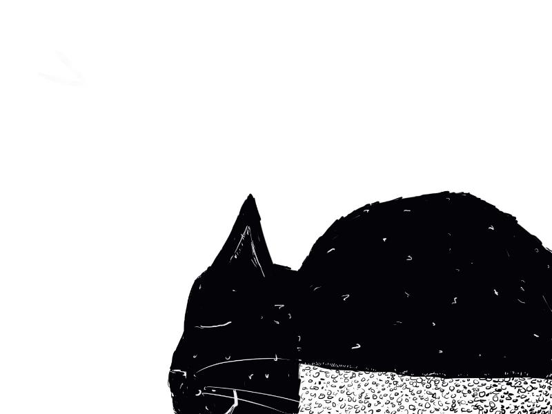 Sleepy Cat illustration cat drawing design