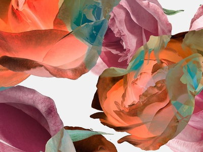 Rose Dance design pattern art botanical art fashion rainbow color abstract plant flower photography photo collage botanical roses