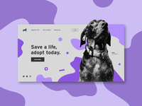Pet Adoption Concept