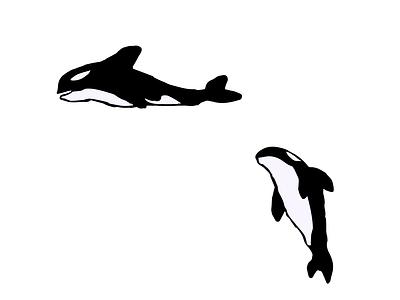 ORCAS animales orca dibujodigital dibujo vector design ilustrator