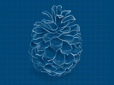 Pinecone chalk grid tree nature illustration drawing blue cone pine sketch blueprint pinecone
