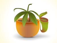 Plantiis