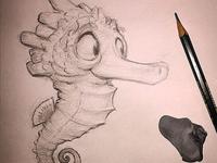 Seahorse 4web