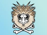 Phillipean Eagle Skull