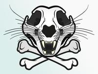 Snow Leopard Skull