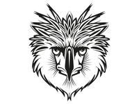Phillipean Eagle