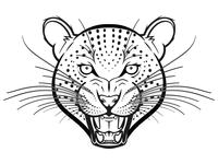 Snow Leopard Bw