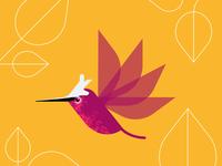 Snowcapped Hummingbird