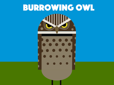 Burrowing owl owl birds illustration