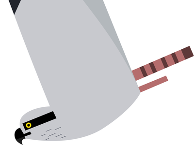 Osprey illustration