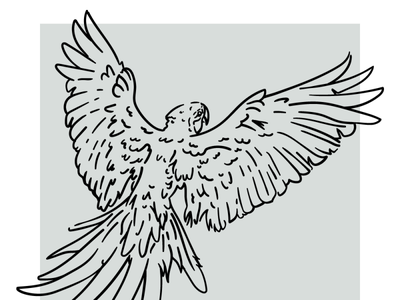 WIP - Parrot Ditching Quarantine wip flying parrot bird outline linework illustration vector