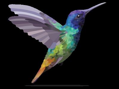 Hummingbird nature colorful bird hummingbird