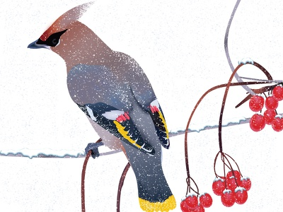 Winter bird details illustration mood beautiful red viburnum tree snowflakes snow bird bombycilla waxwing bohemian winter