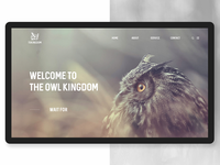 Tokingdom Website Design