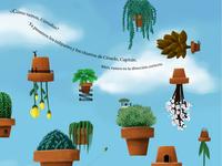 Macetas Voladoras   Flying pots