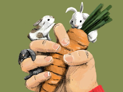 A carrot in the rabbits