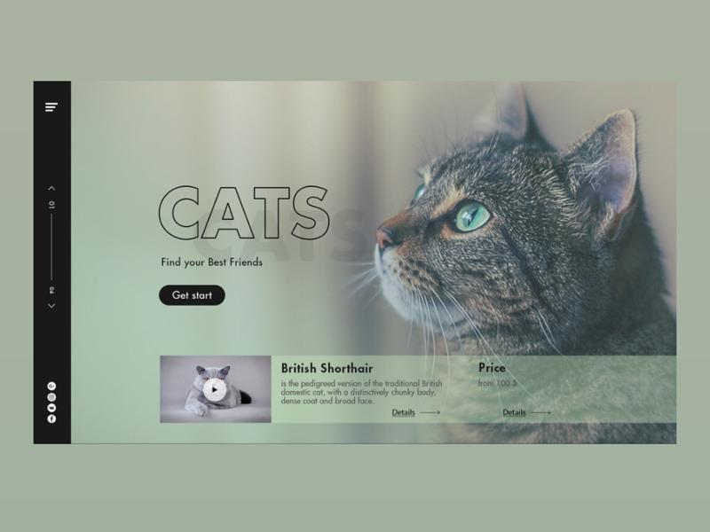 Сатs Homepage Concept webdesign website concept homepage ux ui animals cats landing