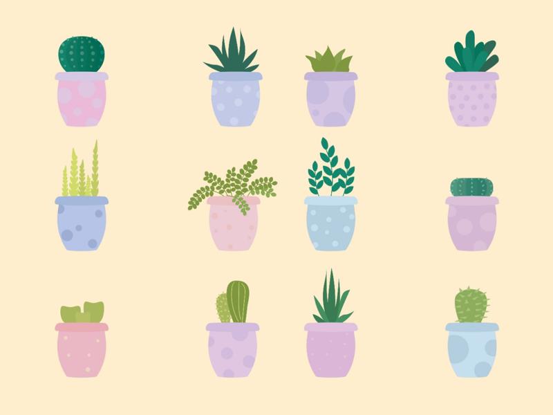 succulent pots flower illustration illustrator adobe illustrator adobe vector graphic vector artwork art cactus succulent