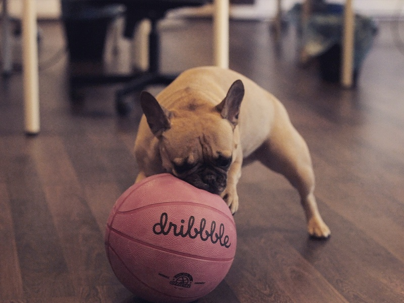me @ work basketball dribbble ball pink ball bull logo bulldog dog dribbble branding design