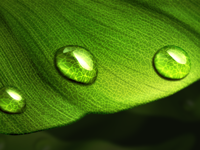 Droplets on leaf study | realistic | photoshop painting