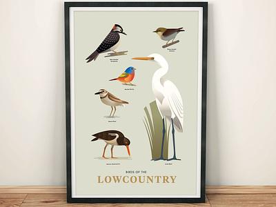 Birds of the Lowcountry wildlife nature animals graphic design coastal shorebird songbird plover woodpecker egret stylized illustration